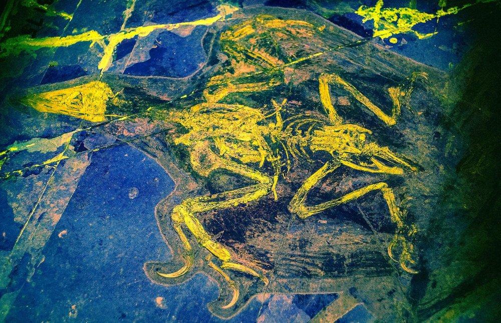 3D-sken fosilov.