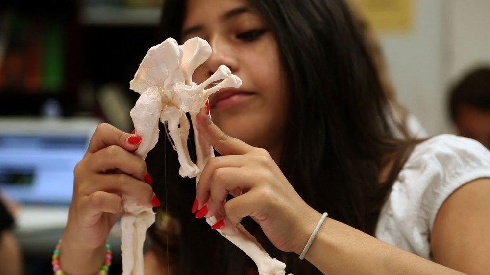 3D-tisk in paleontologija.